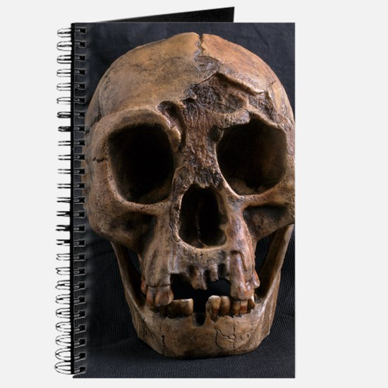 Homo floresiensis skull Journal