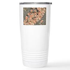 Hippocampal neurons, SEM Travel Mug
