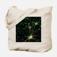 Embryonic stem cells, light micrograph Tote Bag