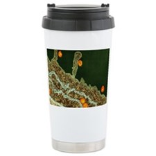 Hepatitis C viruses, TEM Travel Mug