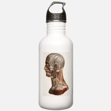 Head and neck anatomy, Water Bottle