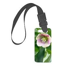 Hellebore (Helleborus orientalis Luggage Tag