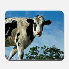Heifer cow Mousepad