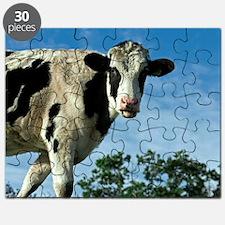 Heifer cow Puzzle