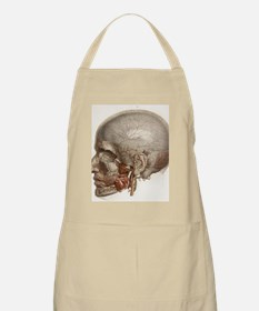 Head vascular anatomy, historical artwork Apron