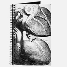 Heart anatomy, 18th century Journal