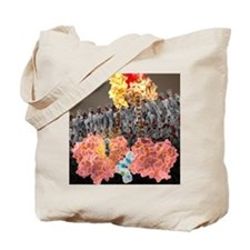 Growth hormone receptor, molecular model Tote Bag