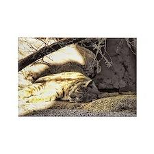 Desert Bobcat Rectangle Magnet
