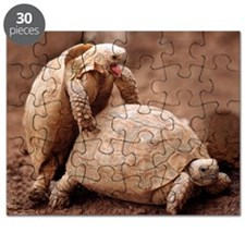 Greek tortoises mating Puzzle