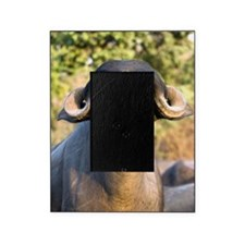 Domestic Asian water buffalo Picture Frame