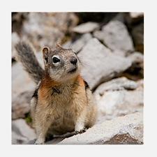 Golden-mantled ground squirrel Tile Coaster
