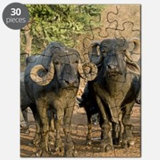 Domestic Asian water buffalo Puzzle