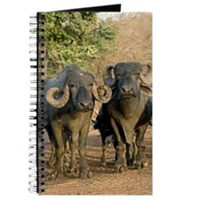 Domestic Asian water buffalo Journal