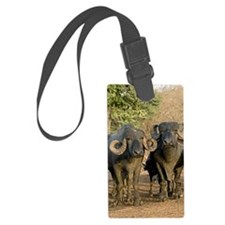 Domestic Asian water buffalo Luggage Tag