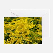 Golden Rod (Solidago sp.) Greeting Card