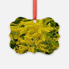 Golden Rod (Solidago sp.) Ornament