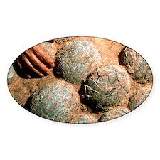 Dinosaur eggs Decal