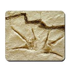 Dinosaur footprint fossils Mousepad
