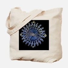 Diatoms, light micrograph Tote Bag