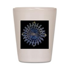 Diatoms, light micrograph Shot Glass