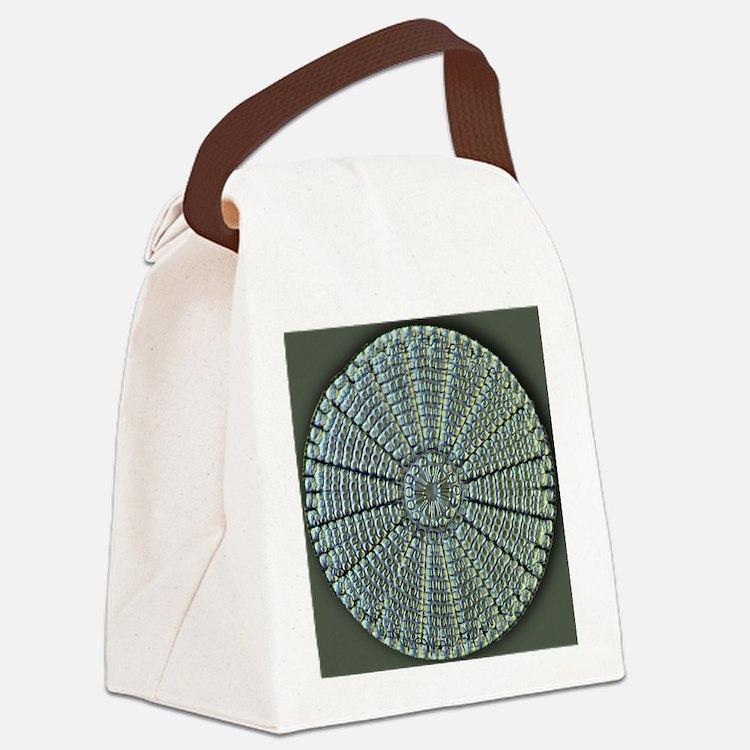 Diatom, light micrograph Canvas Lunch Bag
