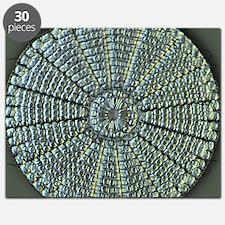 Diatom, light micrograph Puzzle