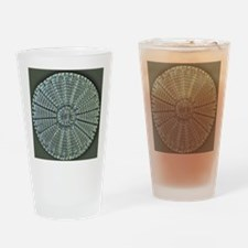Diatom, light micrograph Drinking Glass