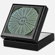 Diatom, light micrograph Keepsake Box
