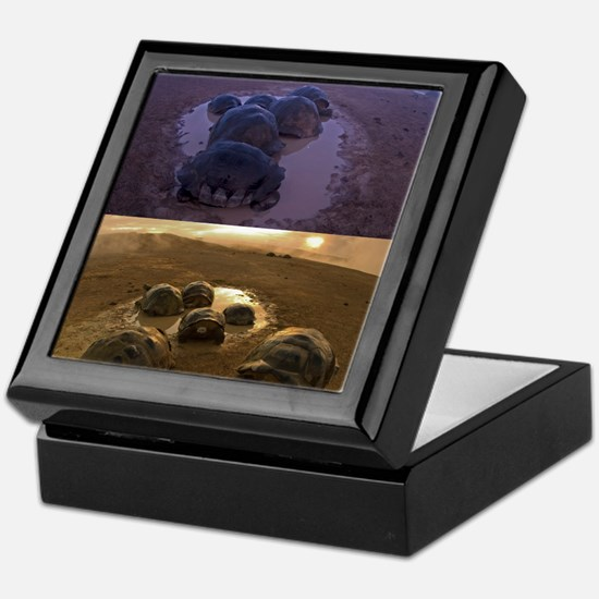 Galapagos giant tortoise thermoregula Keepsake Box
