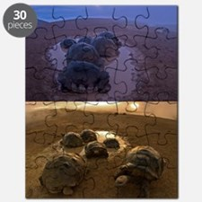 Galapagos giant tortoise thermoregulation Puzzle