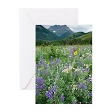 Gaillardia aristata Greeting Card
