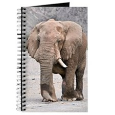 Desert-adapted elephant Journal