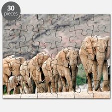 Desert-adapted elephants Puzzle