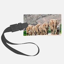 Desert-adapted elephants Luggage Tag