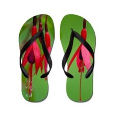 Fuchsia magellanica Flip Flops