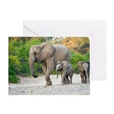 Desert-adapted elephants Greeting Card