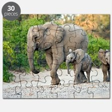 Desert-adapted elephants Puzzle