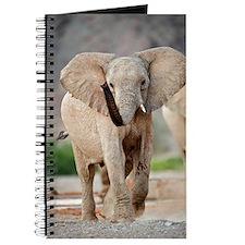 Desert-adapted elephant Journal