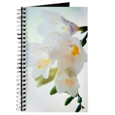 Freesia sp Journal