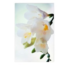 Freesia sp Postcards (Package of 8)