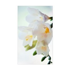 Freesia sp Decal