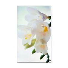 Freesia sp Rectangle Car Magnet