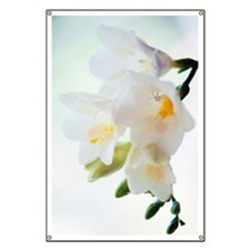 Freesia sp Banner