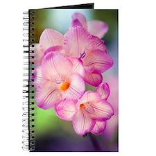 Freesia sp Journal