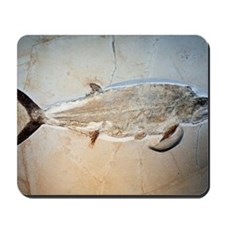 Fish fossil Mousepad