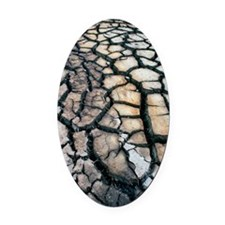 Cracked earth Oval Car Magnet