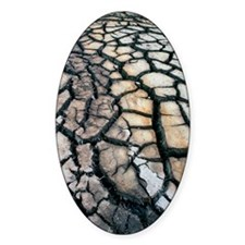 Cracked earth Decal