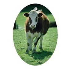 Cow Oval Ornament
