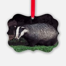 European badger at dusk Ornament