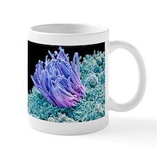 Fallopian tube, SEM Mug